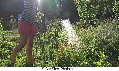 woman watering flower and spice in garden sunny summer day....
