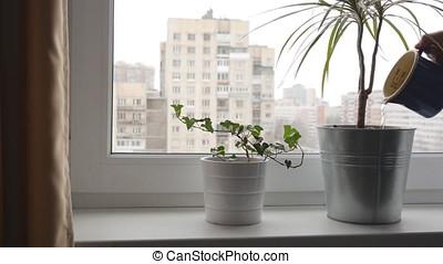 Woman watering houseplants on a window sill