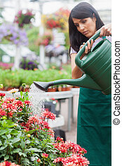 Woman watering plants in garden centre