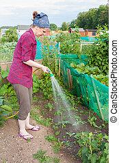 Woman watering strawberries
