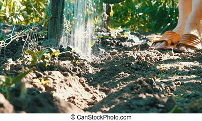 Woman watering young plant sprouts in the garden, water jets from the watering can flow to the soil