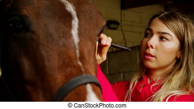 Woman wearing rein to horse in stable 4k - Close-up of woman...