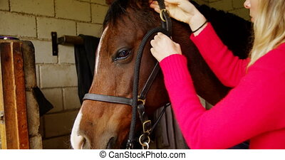 Woman wearing rein to horse in stable 4k - Young woman...