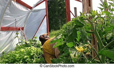 woman weed tomato work