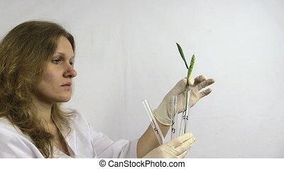 woman wheat plant flask