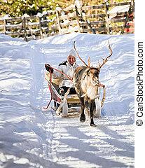 Woman while reindeer sleigh ride in winter Rovaniemi