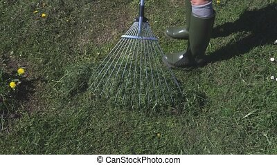 Woman with a rake collecting the grass