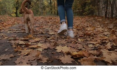 Woman with adorable dog jogging in autumn park