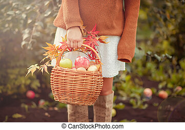 Woman with basket full of ripe apples in a garden. Apple harvest. Autumn concept