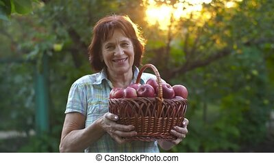 Woman with basket of apples - Woman in garden with basket of...