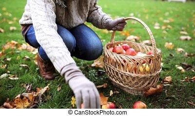 woman with basket picking apples at autumn garden - farming,...