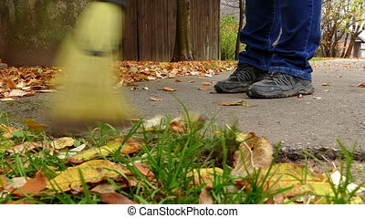 Woman with brush sweeping the fallen leaves - Woman with...
