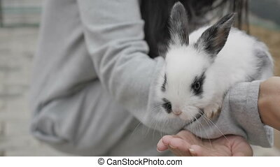 Woman with bunny in zoo