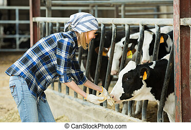 Woman with cows at farm - Cheerful cowgirl in jeans taking ...