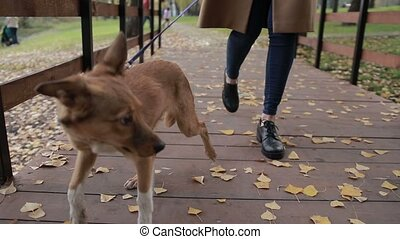 Woman with cute dog walking on bridge in park