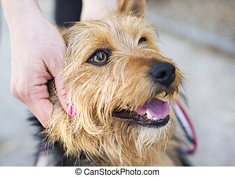 Woman with dog - Female hand patting smiling brown dog head