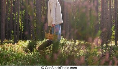 woman with mushrooms in basket walking in forest - picking ...