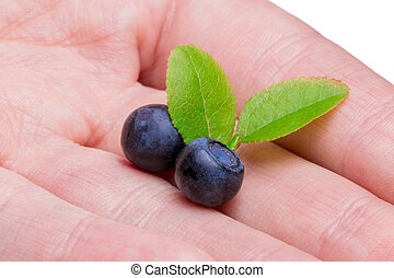 Woman with of freshly picked organic blueberries