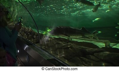 Woman with phone and her little daughter watching sea life fishes in big aquarium arch. Camera motion shot with gimbal.