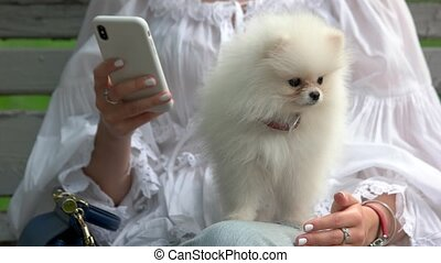 Woman with smartphone and white hairy dog. Hairy chihuahua...