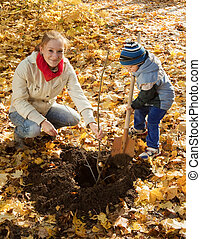 woman with son planting tree in autumn - young woman with ...