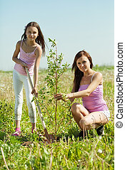 woman with teen daughter setting tree i - Mid adult woman...