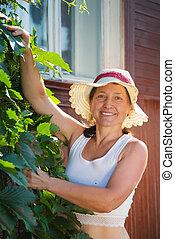 woman with virginia creeper - senior woman gardener with ...