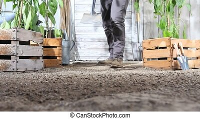 woman work in vegetable garden digging spring soil with shovel, near wooden boxes full of sweet pepper plants
