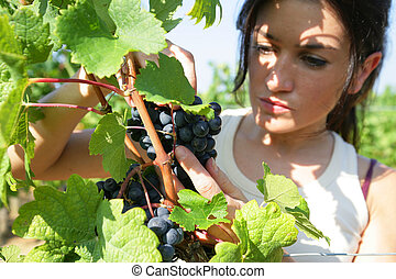 woman working in a vineyard