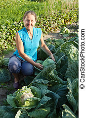woman working  in field of cabbage