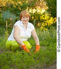 woman working in field of carrot
