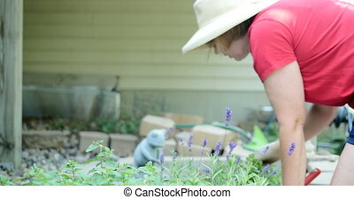 Woman working in garden UHD 4k