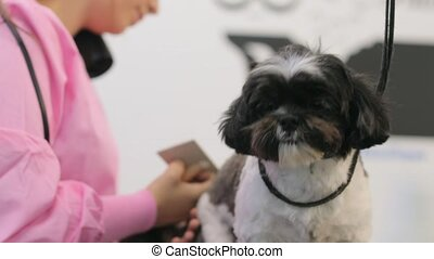 Woman Working In Pet Shop And Grooming Dog For Beauty -...