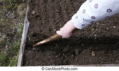 Woman working in the garden, decimates the ground with a stick