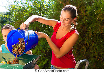 Woman working with grape harvesting machine and with many ...