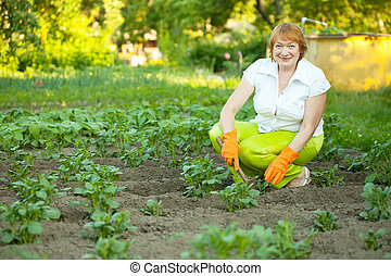 woman works in potato plant