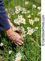 womans , πάρκο , αντοχή , ανάμιξη , αρχαιότερος , λουλούδια