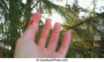 Woman's blurred hand reaches for the fir branch on magic sun background in winter with lense flare effects
