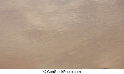 Womans feet walking on the wet sand along the tide at the...