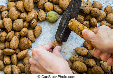 Woman's Hand  Holding a Hammer for Cracking Almonds