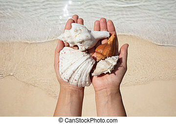 Woman's Hand Holding Seashells Over The Sand At Beach