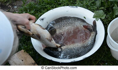 Woman's hand pulls a large carp out of the bowl and pull out...