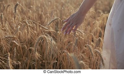 Woman's hand touching golden wheat ears