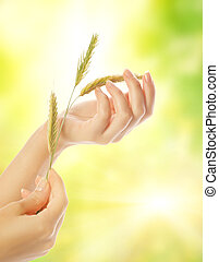 Woman's hand with dry herb