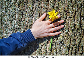 Woman's hand with flower on tree