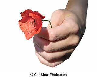 Woman's hand with poppy