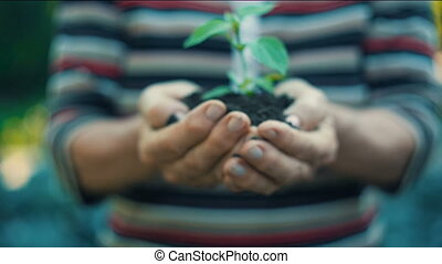 Woman's hands holding green small plant