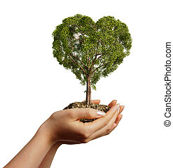 Woman's hands holding soil with a tree heart shaped. Viewed...