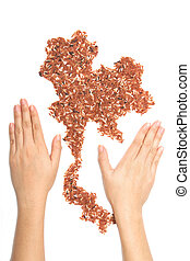 woman's hands holding the pile of brown organic rice and jasmine rice in map of Thailand shape on white background