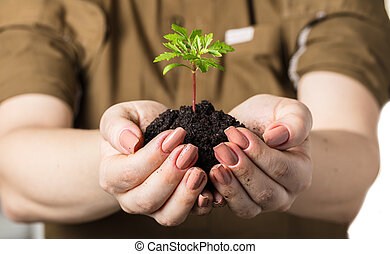 hands with a young plant growing